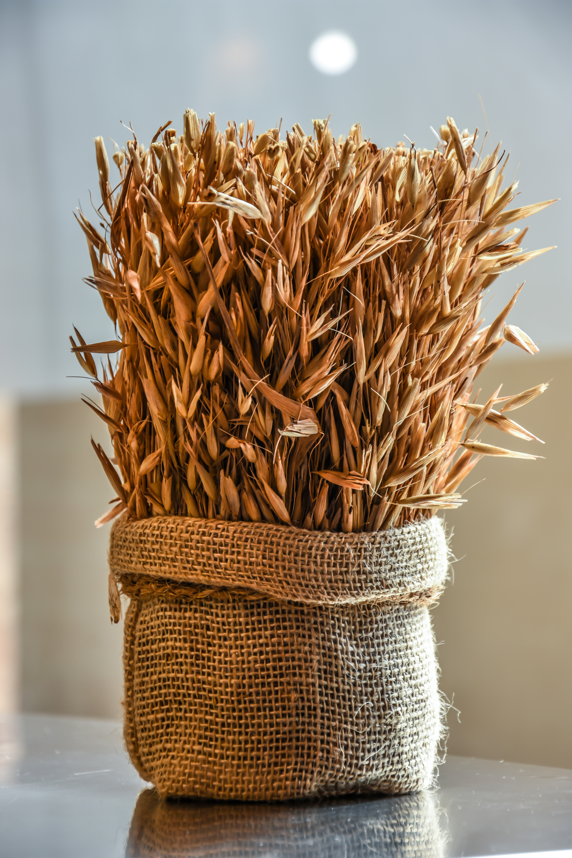wheat sacks - HD853×1280